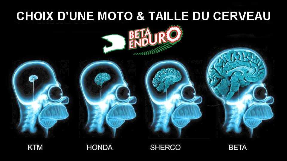 cerveau_beta
